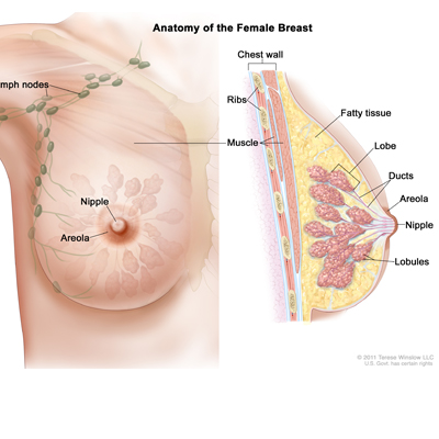 Of biopsies for breast